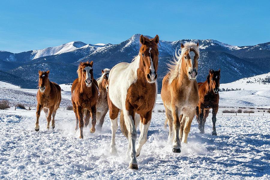 Horses in Winter by David Soldano