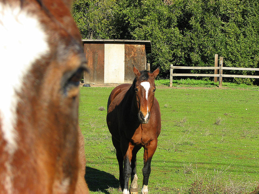 Horse Photograph - Horses by Kathy Roncarati