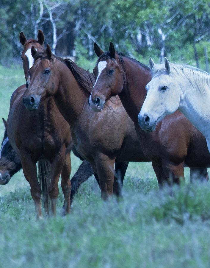 Horses Photograph - Horses Looking by Eleszabeth McNeel