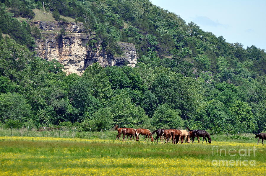 Horses Photograph - Horses On The Rubideaux by Marty Koch