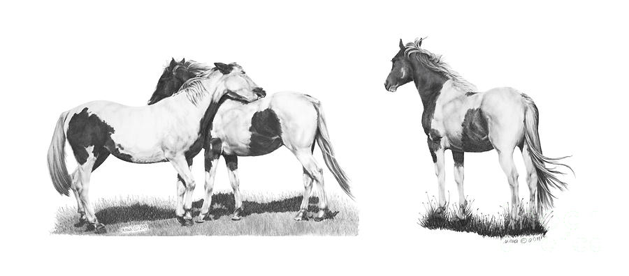 Horses Pintos by Marianne NANA Betts