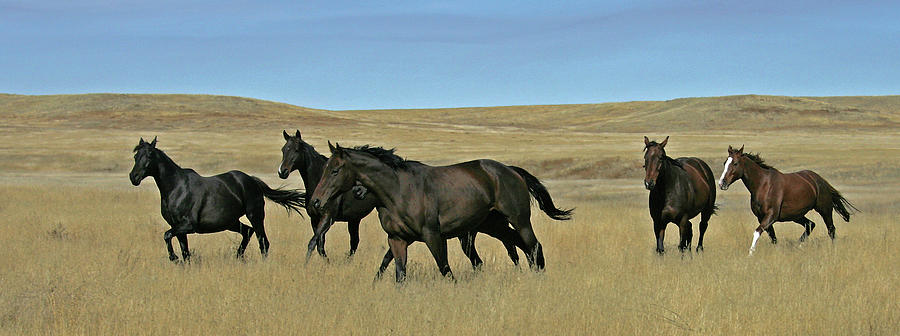 Wyoming Photograph - Horses by Ralph Fahringer