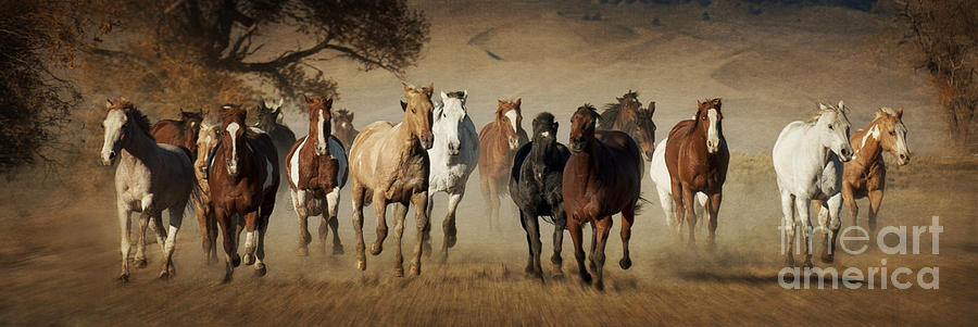 Horses Running Free Photograph - Horses Running Free by Heather Swan