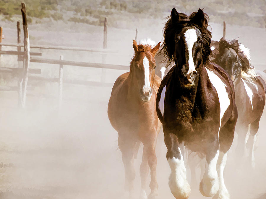 Horses Running into a dusty ranch corral by Nadja Rider
