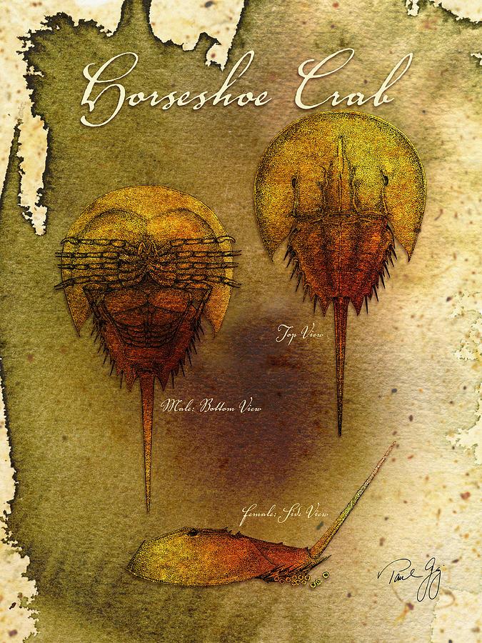 Horseshoe Crab Mixed Media - Horseshoe Crab by Paul Gaj