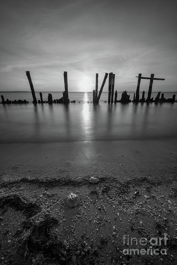 Walk On Water Photograph - Horseshoe Crab Sunset Bw by Michael Ver Sprill