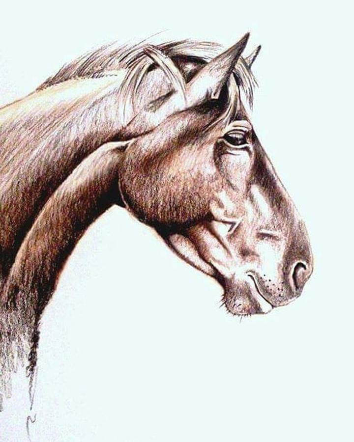 Horse Mixed Media - Horsing Around  by Janine Bouwer