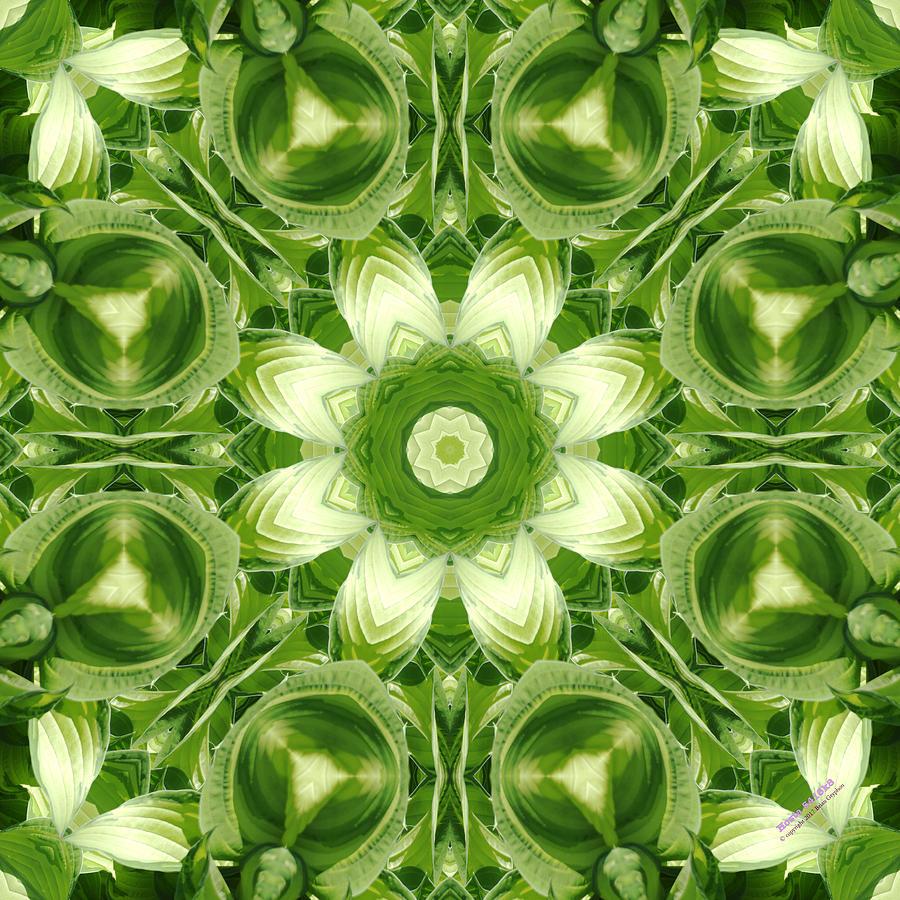 Hosta Digital Art - Hosta 5416k8 by Brian Gryphon