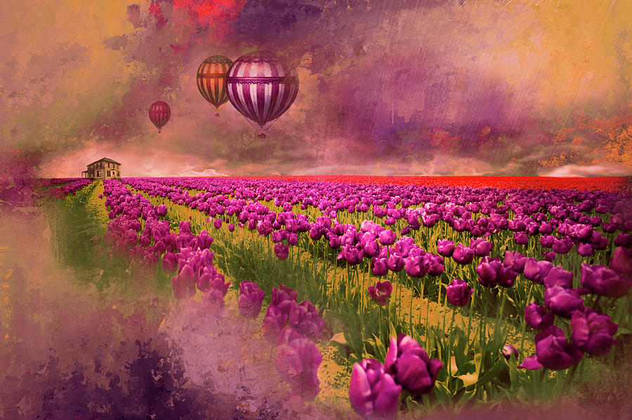 Hot Air Balloons Over Tulip Fields Photograph