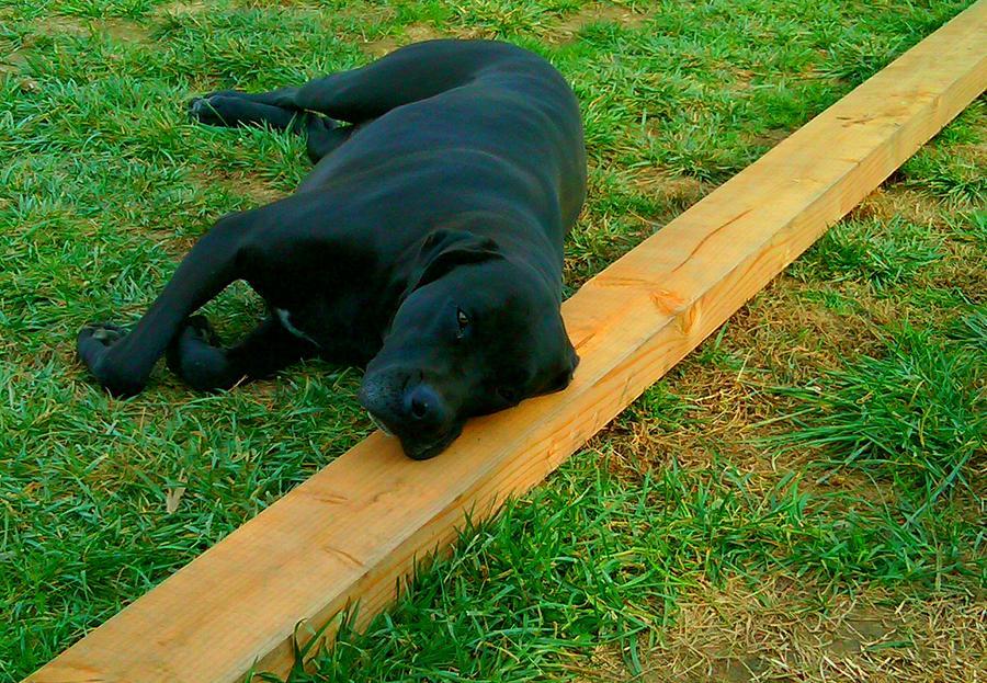 Dogs Photograph - Hot Dog On A Stick by Douglas Kriezel