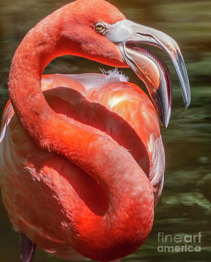 The Fabulous Flamingo Photograph