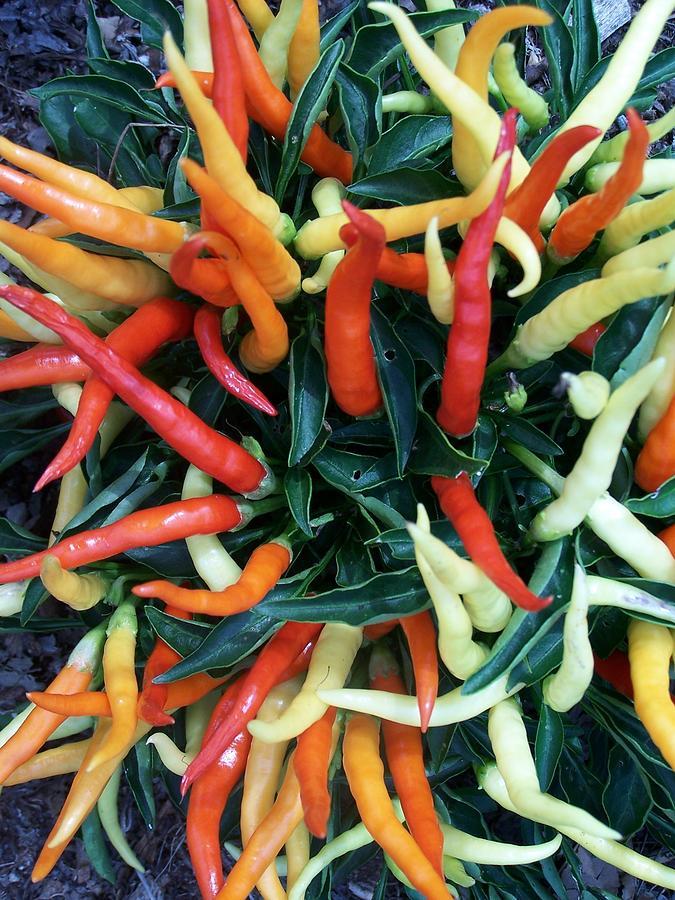 Hot Stuff Photograph - Hot Hot Hot by Vijay Sharon Govender
