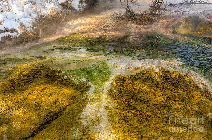 Mammoth Hot Springs Photograph - Hot Springs Pool by Sue Smith