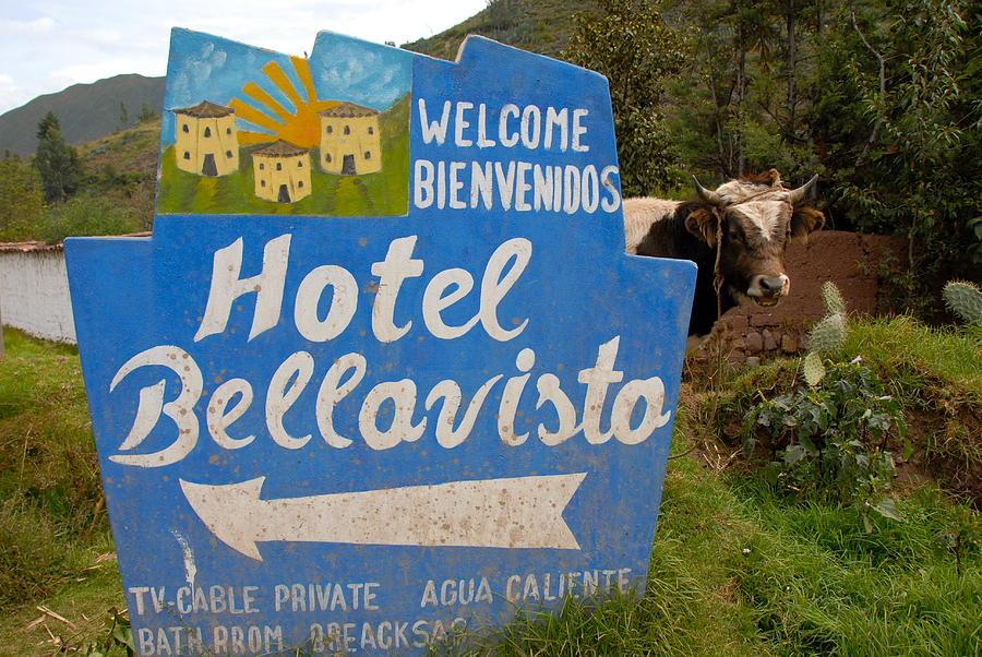 Cow Photograph - Hotel Bellavisto by Lynn Friedman
