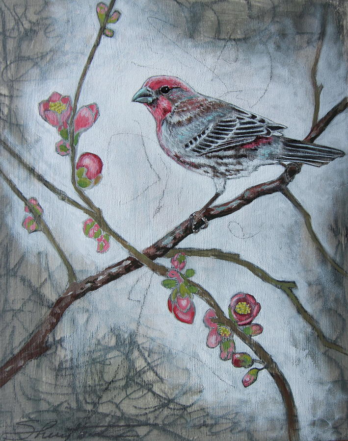 Bird Mixed Media - House Finch by Sheri Howe