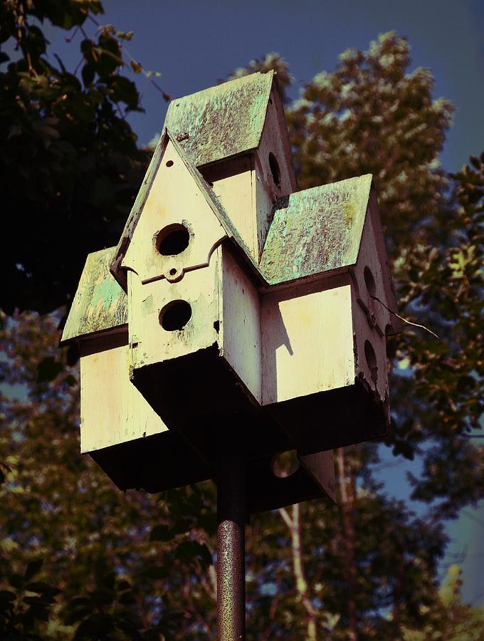 Bird Photograph - House Sparrow by JAMART Photography