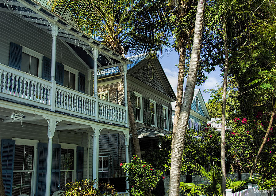 Key West Photograph - Houses In The Palms  by Dale Wilson