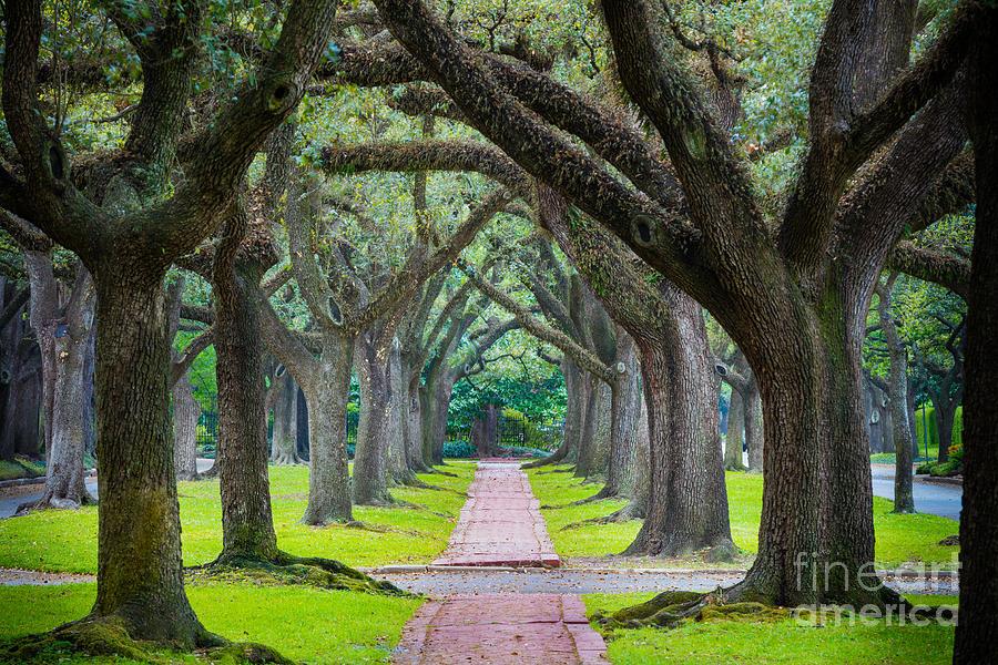 Houston Trees Photograph