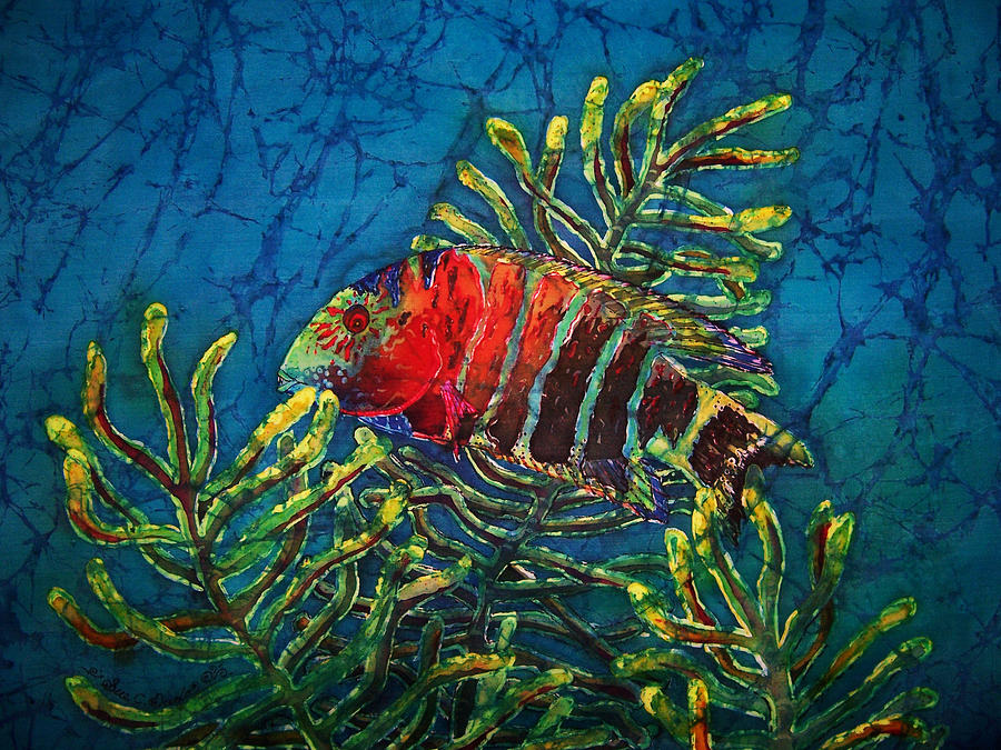 Fish Painting - Hovering - Red Banded Wrasse by Sue Duda