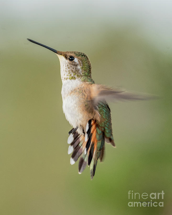 Hovering Photograph