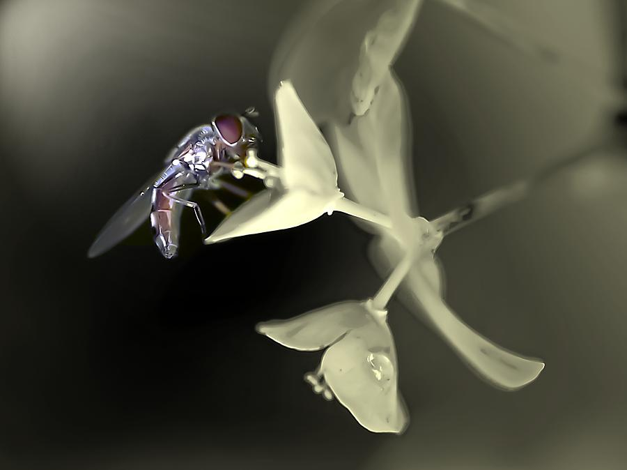 Bee Photograph - Hoveryfly by Terry Bridges