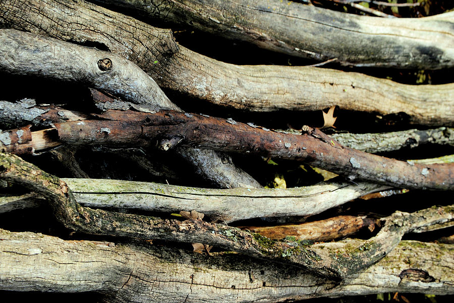 Bark Photograph - How Much Wood Would A Woodchuck Chuck Natural Wood Pile Ledge Park Wisconsin by Laura Pineda