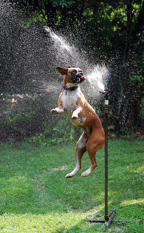 Dog Photograph - How To Handle A Heat Wave by Skip Willits