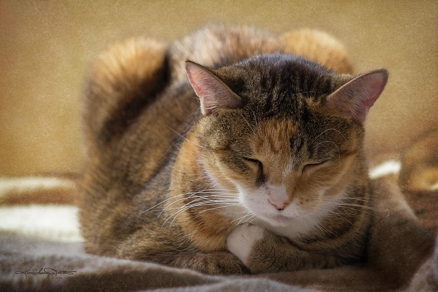Cat Photograph - How To Meditate by Karen Casey-Smith