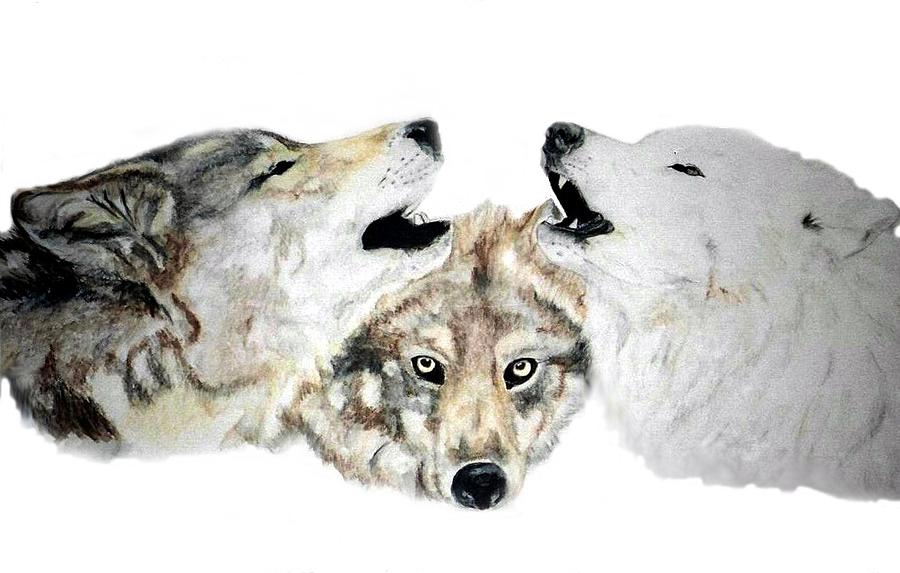 Wolves Painting - Howling by Debra Sandstrom