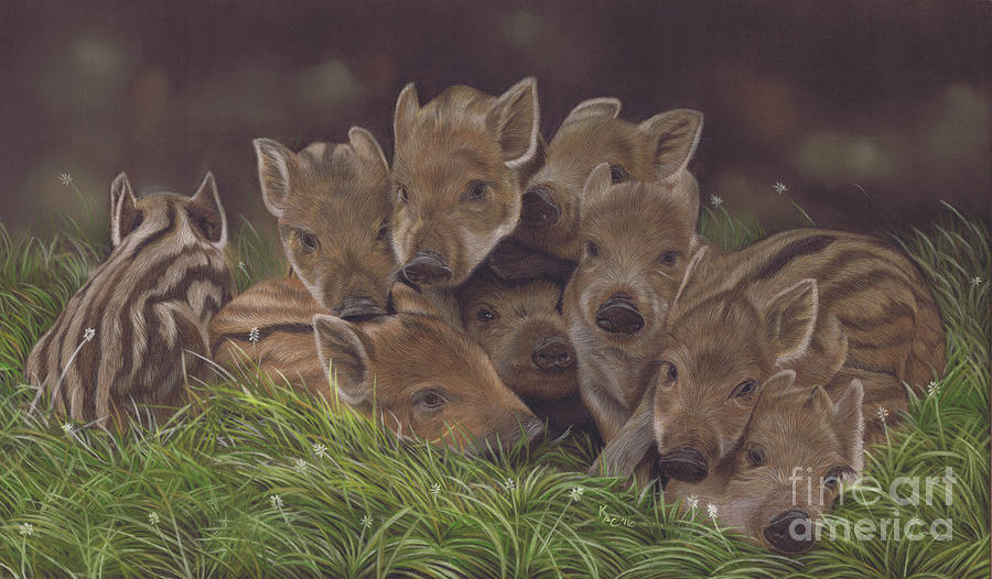 Wild Boar Painting - Huddle of Humbugs by Karie-ann Cooper