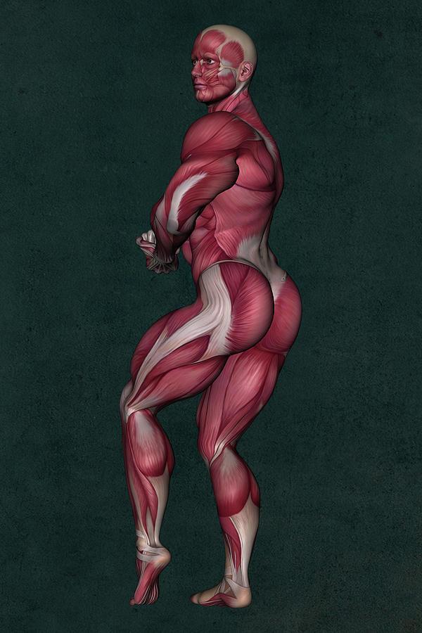 Human Anatomy Mixed Media - Human Anatomy 23 by Barroa Artworks