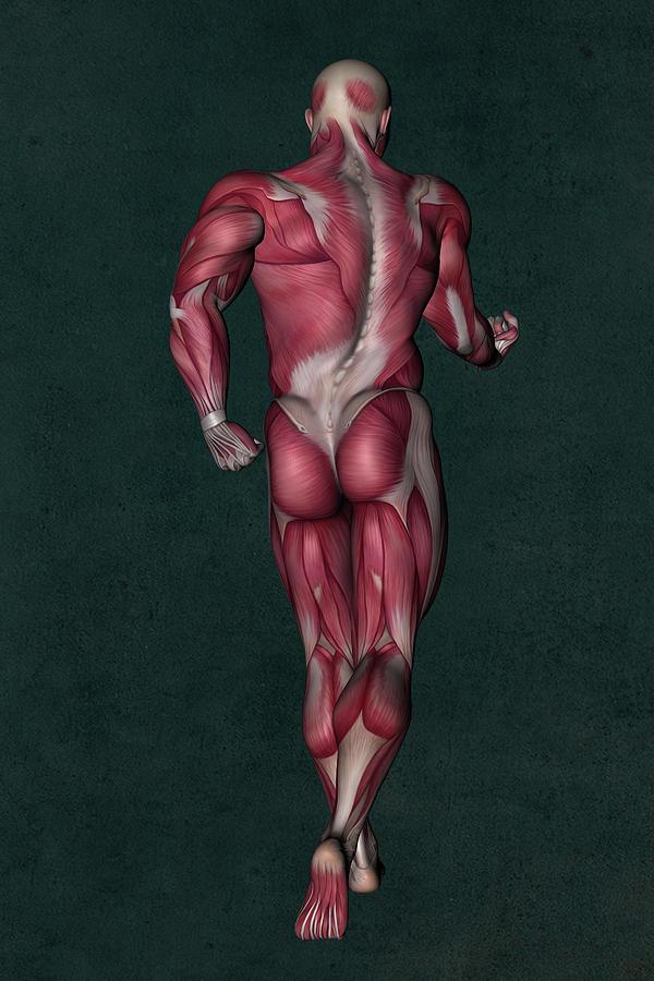 Human Anatomy 25 Mixed Media