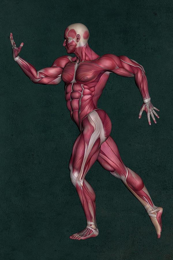 Human Anatomy Mixed Media - Human Anatomy 29 by Barroa Artworks