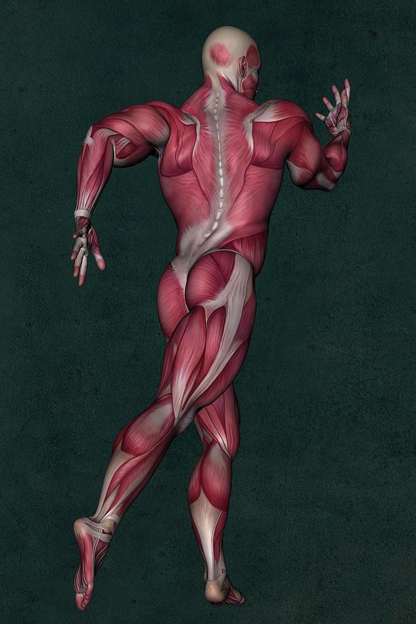 Human Anatomy Mixed Media - Human Anatomy 31 by Barroa Artworks