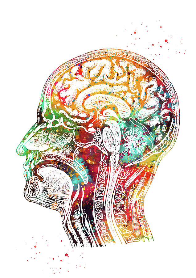 Human Head Digital Art - Human head by Erzebet S