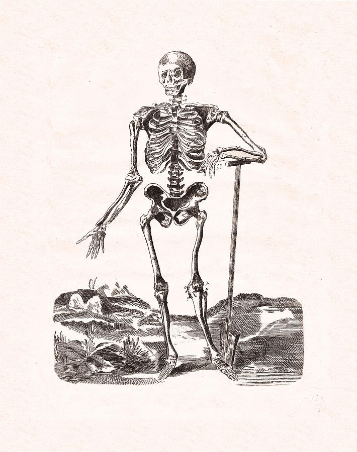 Human Skeleton Digital Art
