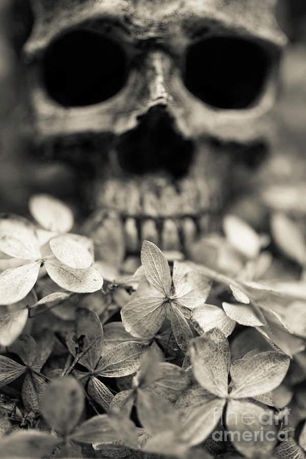 Still Life Photograph - Human Skull Among Flowers by Edward Fielding