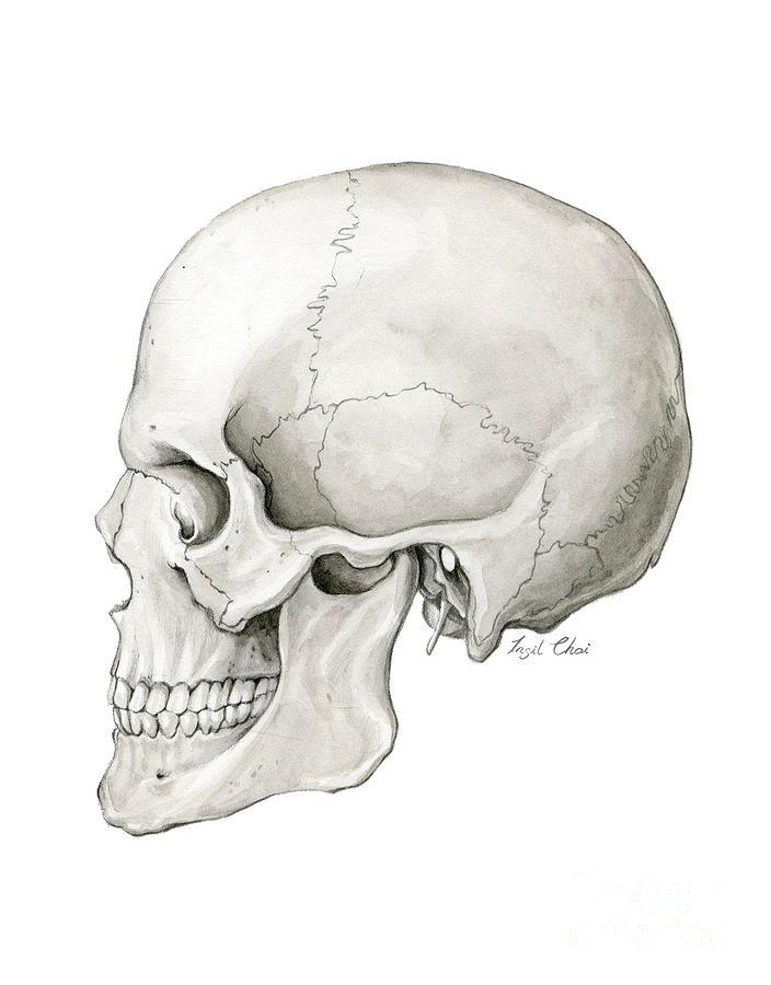 Human Skull Painting - Human Skull by Insil Choi