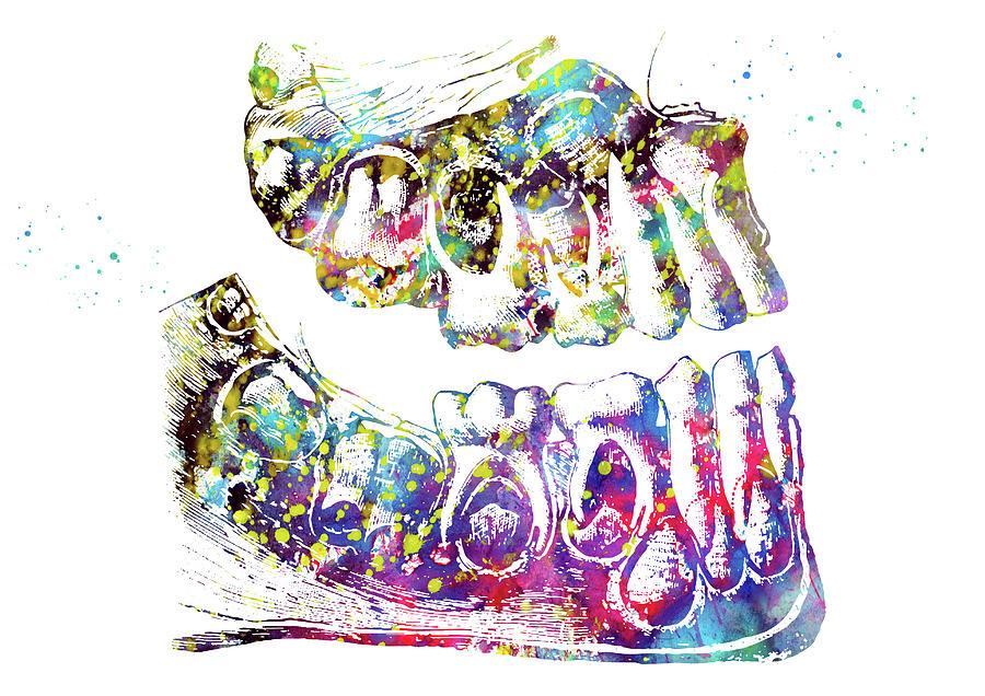 Human Teeth Anatomy 2 Digital Art By Erzebet S