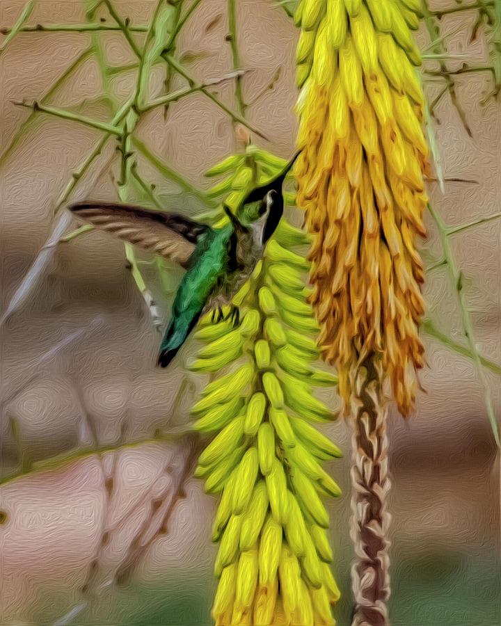 Hummingbird Treat Op1815 Photograph
