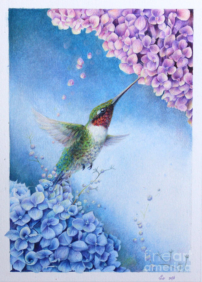 Humming Bird Drawing - Humming Bird and Hydrangeas  by Kay Walker