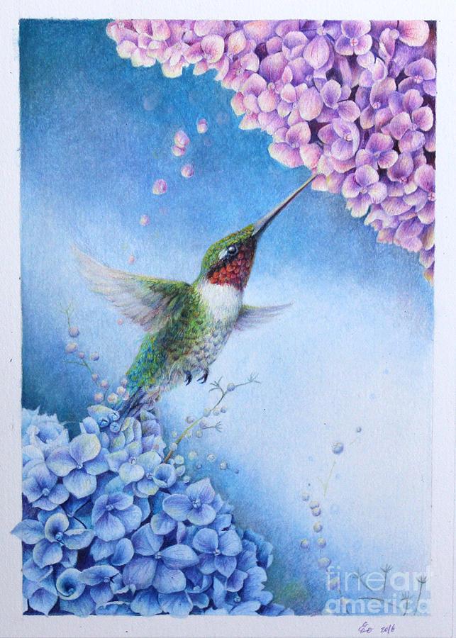Humming Bird Drawing - Humming Bird And Hydrangeas  by Kay Walker