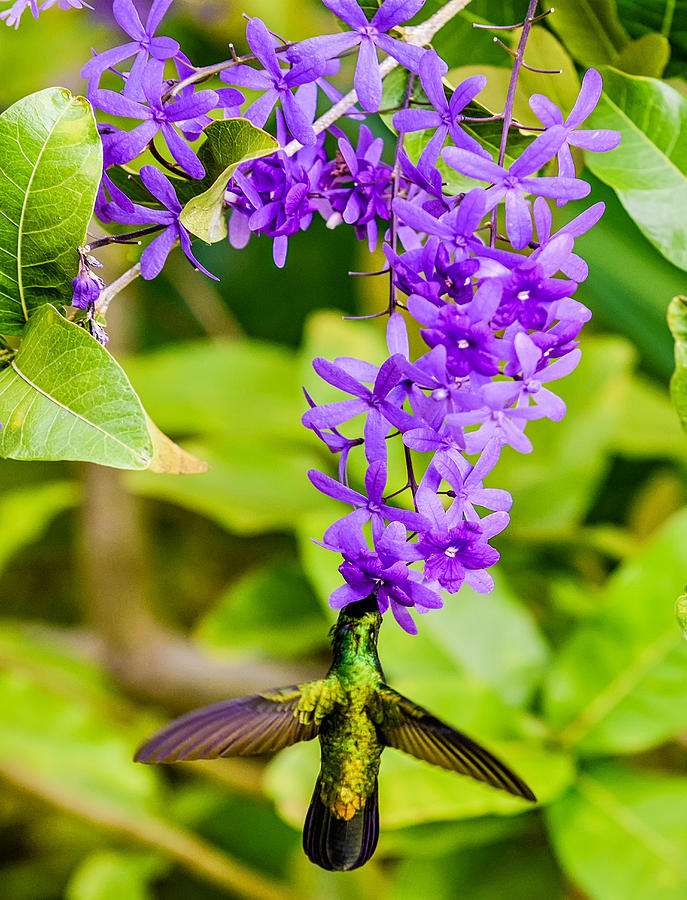 Humming Bird Flowers by Daniel Marcion