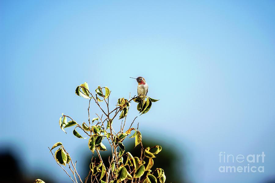 Humming Bird Photograph - Humming Bird on a branch by Micah May