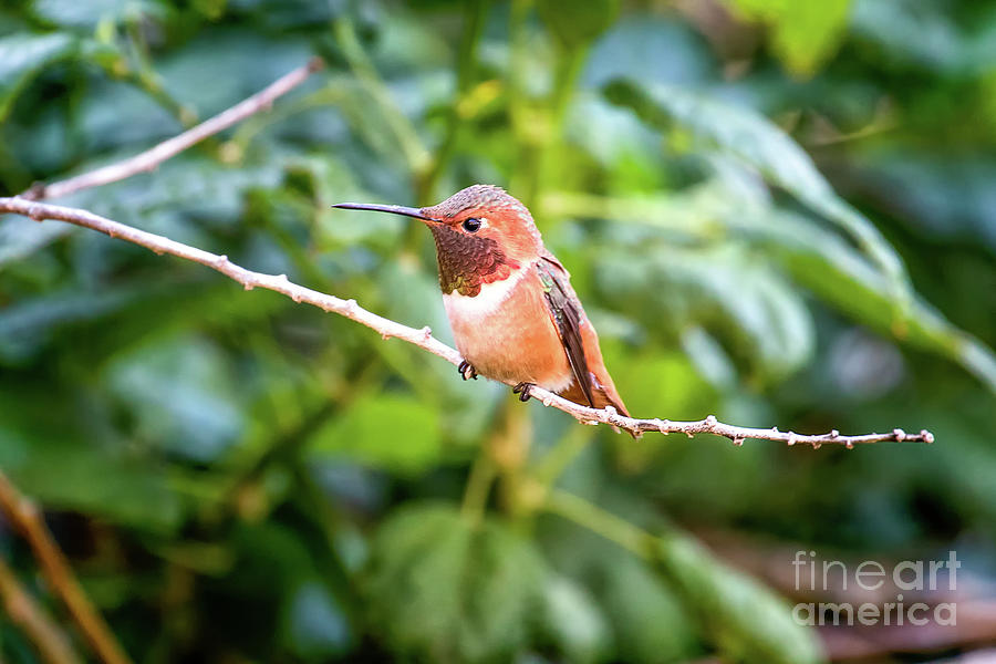 Humming Bird on Stick by Stephanie Hayes