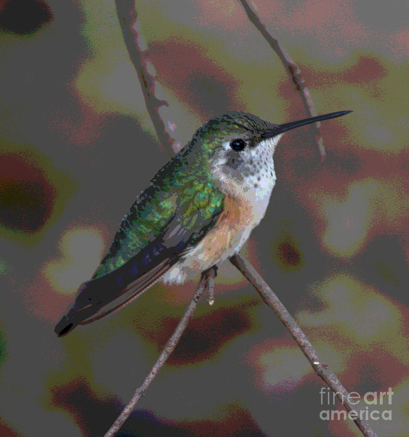 Humming Bird Perch by Jack Ader