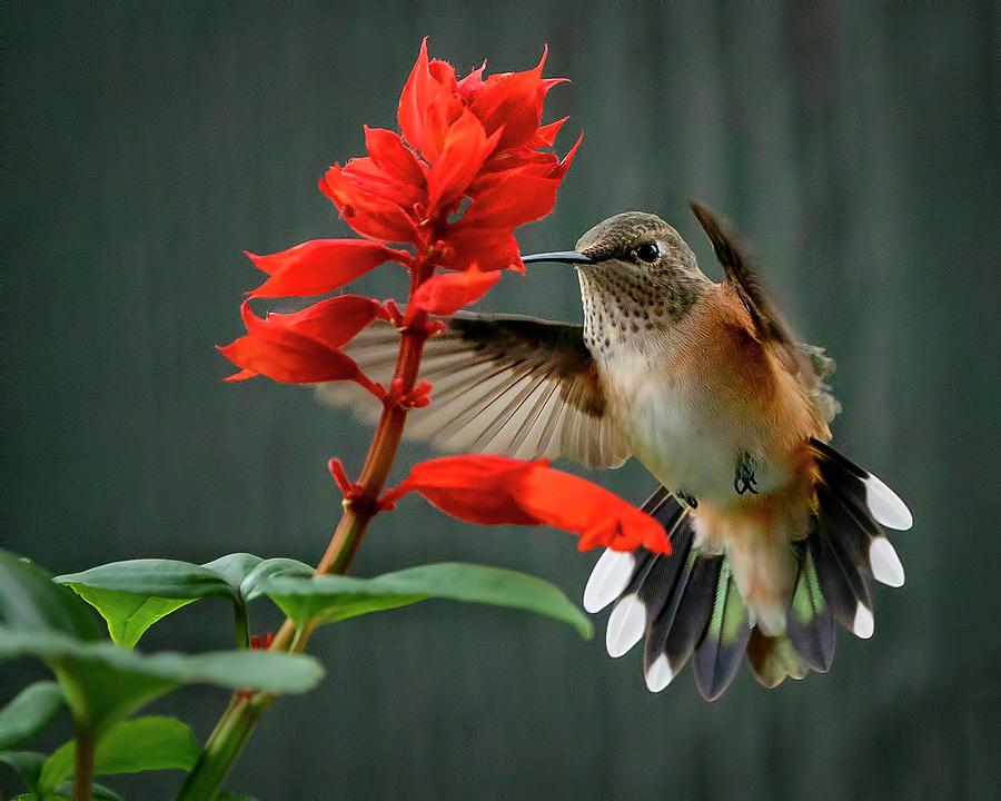Hummingbird and Flowers by David Soldano