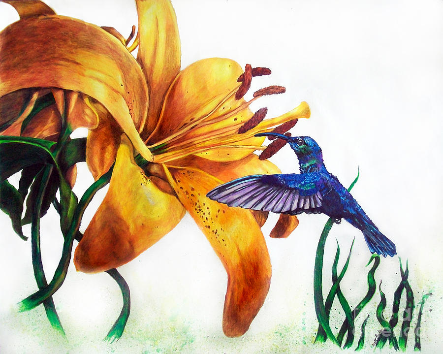 Hummingbird And Yellow Flower Drawing By Scott Parker