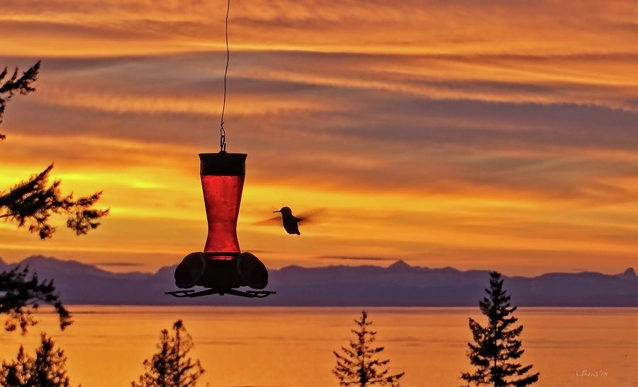 Hummingbird Photograph - Hummingbird At Sunset. by Bill Linn