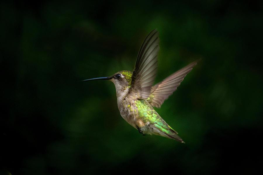 Hummingbird b by Kenneth Cole